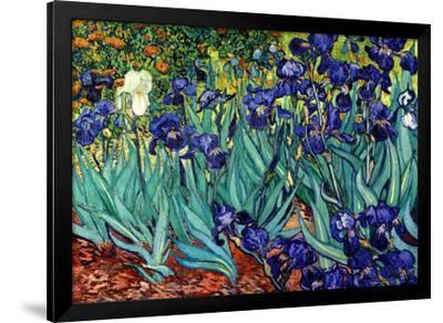 Irises, Saint Remy, C.1889