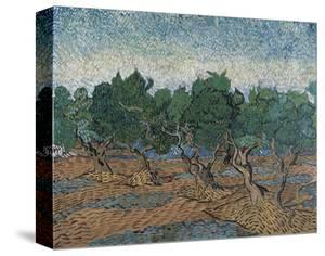 Olive Grove, 1889 by Vincent van Gogh
