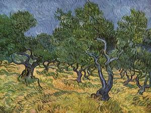 Olive Orchard Mid-June, 1889 by Vincent van Gogh