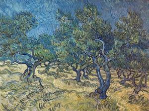 Olivenbaeume (Les Oiliviers), 1889 by Vincent van Gogh