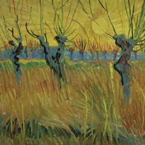 Pollarded Willows and Setting Sun, 1888 (Oil on Card) by Vincent van Gogh