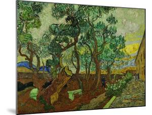 The Garden of St. Paul's Hospital at St. Remy, c.1889 by Vincent van Gogh