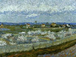 Van Gogh: Peach Tree, 1889 by Vincent van Gogh