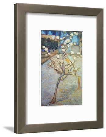 Van Gogh: Peartree, 1888