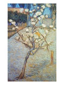 Van Gogh: Peartree, 1888 by Vincent van Gogh