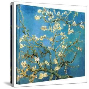 Vincent van Gogh 'Blossoming Almond Tree' Wrapped Canvas by Vincent van Gogh
