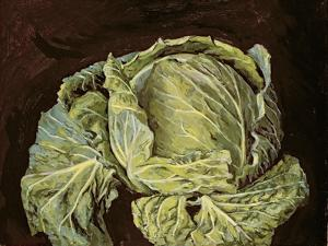 Cabbage Still Life, 2000 by Vincent Yorke