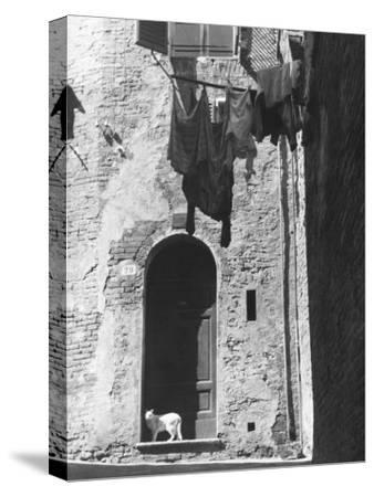 Cat and Laundry Hanging on a Street in Siena