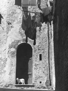 Cat and Laundry Hanging on a Street in Siena by Vincenzo Balocchi