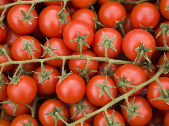 Vine Tomatoes in Street Market, Ortygia, Syracuse, Sicily, Italy, Europe-Martin Child-Photographic Print