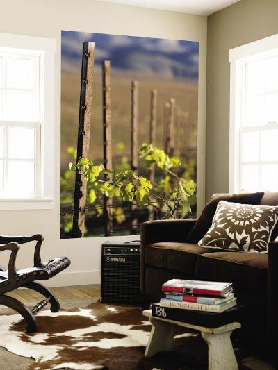 Vines in Winter at Carmel Road's Valley View Vineyard-Brent Winebrenner-Wall Mural