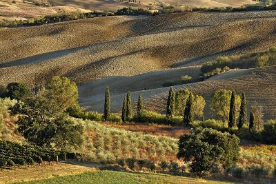Vineyard and Olive Groves among Agricultural Field-Adam Jones-Photographic Print