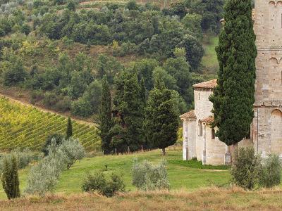 Vineyard and St. Antimo Abbey, Near Montalcino, Italy, Tuscany-Adam Jones-Photographic Print