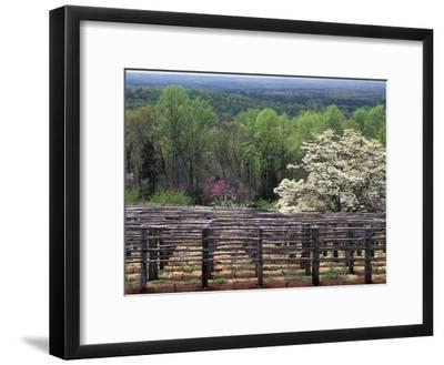 Vineyard at Monticello, Thomas Jefferson's Home in Charlottesville, Virginia