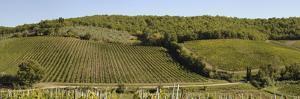 Vineyard, Chianti Region, Radda in Chianti, Siena Province, Tuscany, Italy