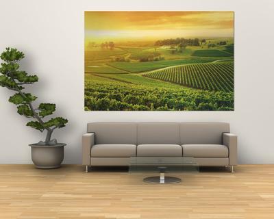 https://imgc.artprintimages.com/img/print/vineyard-hunter-valley-australia_u-l-pfhauz0.jpg?p=0