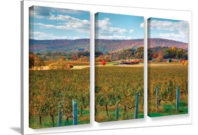 Vineyard In Autumn, 3 Piece Gallery-Wrapped Canvas Set-Steve Ainsworth-Gallery Wrapped Canvas Set