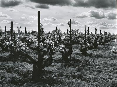 https://imgc.artprintimages.com/img/print/vineyard-landscape-c-1955_u-l-q1g6lz90.jpg?p=0
