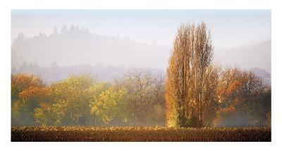Vineyard Mist-Lance Kuehne-Giclee Print