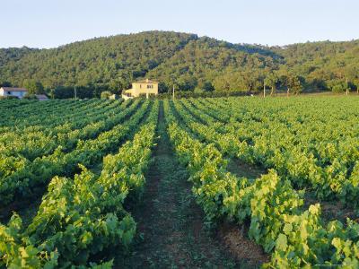 Vineyard, the Var, Cote d'Azur, Provence, France-J P De Manne-Photographic Print