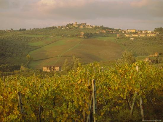 Vineyard, Tuscany, Italy, Europe-Firecrest Pictures-Photographic Print