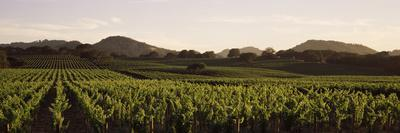 https://imgc.artprintimages.com/img/print/vineyard-with-mountains-in-the-background-alexander-valley-sonoma-county-california-usa_u-l-q12pyvm0.jpg?p=0