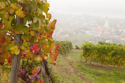 Vineyards Above Spitz an Der Danau, Wachau, Austria, Europe-Miles Ertman-Photographic Print