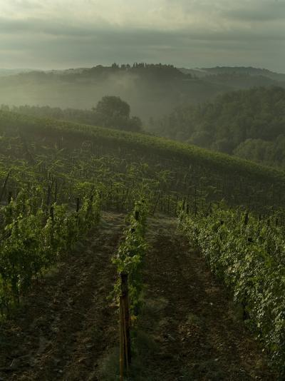 Vineyards Along the Chianti Hillside Through the Fog, Tuscany, Italy-Todd Gipstein-Photographic Print
