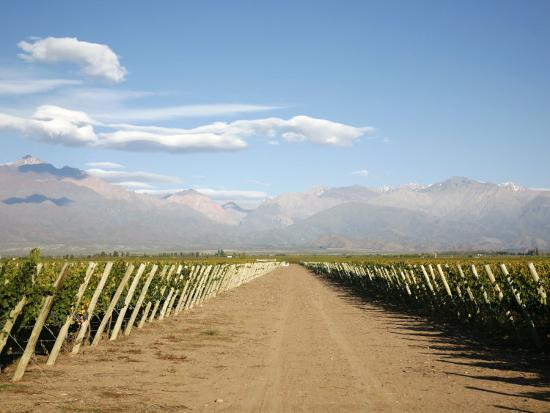 Vineyards and the Andes Mountains in Lujan De Cuyo, Mendoza, Argentina, South America-Yadid Levy-Photographic Print