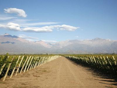 https://imgc.artprintimages.com/img/print/vineyards-and-the-andes-mountains-in-lujan-de-cuyo-mendoza-argentina-south-america_u-l-p91hsf0.jpg?p=0