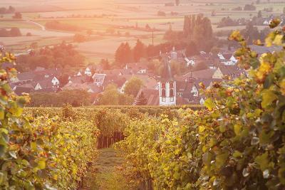 Vineyards at Sunset-Markus-Photographic Print