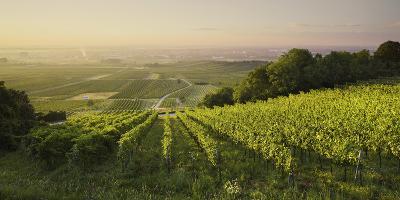 Vineyards Between Baden Bei Wien and Gumpoldskirchen, Vienna Basin, Lower Austria, Austria-Rainer Mirau-Photographic Print