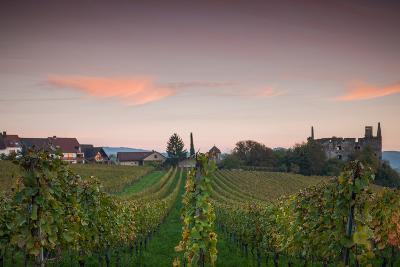 Vineyards in autumn at dusk, Kaiserstuhl, Burkheim, Baden-Wurttemberg, Germany--Photographic Print