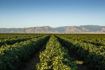 https://imgc.artprintimages.com/img/print/vineyards-in-san-joaquin-valley-california-united-states-of-america-north-america_u-l-pwfm8i0.jpg?p=0