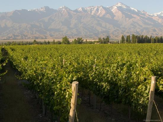 Vineyards in the Mendoza Valley with the Andes in the Background-Michael S^ Lewis-Photographic Print