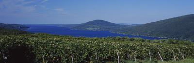 Vineyards Near a Lake, Canandaigua Lake, Finger Lakes, New York State, USA--Photographic Print