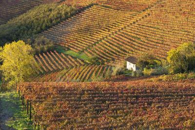 Vineyards, Near Alba, Langhe, Piedmont, Italy-Peter Adams-Photographic Print
