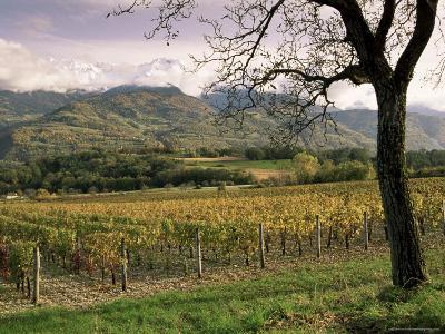 Vineyards Near Chambery, Savoie, Rhone Alpes, France-Michael Busselle-Photographic Print