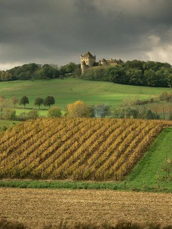 https://imgc.artprintimages.com/img/print/vineyards-near-lons-le-saunier-jura-rhone-alpes-france_u-l-p1d0us0.jpg?p=0
