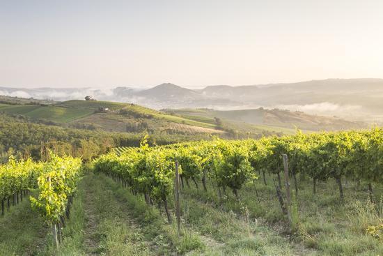 Vineyards near to Orveito, Umbria, Italy, Europe-Julian Elliott-Photographic Print