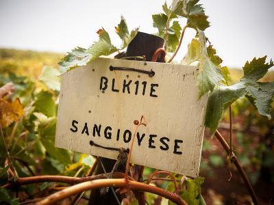 Vineyards-Ian Shive-Photographic Print