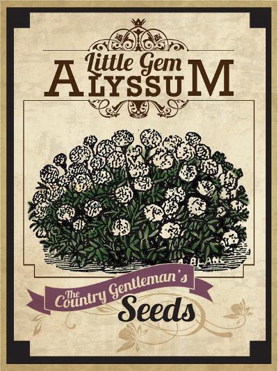 Vintage Alyssum Seed Packet--Giclee Print