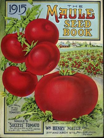 1915 Maule Tomato