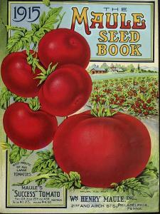 1915 Maule Tomato by Vintage Apple Collection