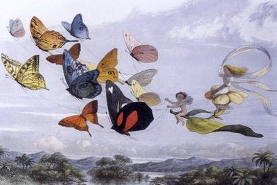 Fairy Butterflies 1