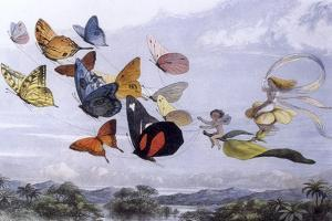 Fairy Butterflies 1 by Vintage Apple Collection