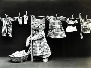 Kitty Laundry by Vintage Apple Collection