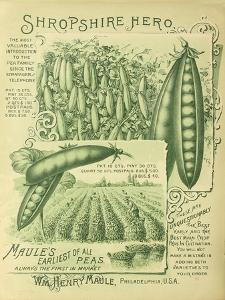 Shropshire Peas by Vintage Apple Collection