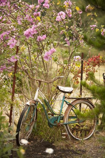 Vintage Bicycle IV-Philip Clayton-thompson-Photographic Print