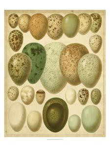 Vintage Bird Eggs II